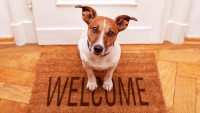 Tips from Local Movers on Moving with Pets